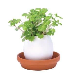 eggling_oeuf plante - idees cadeaux pour noel