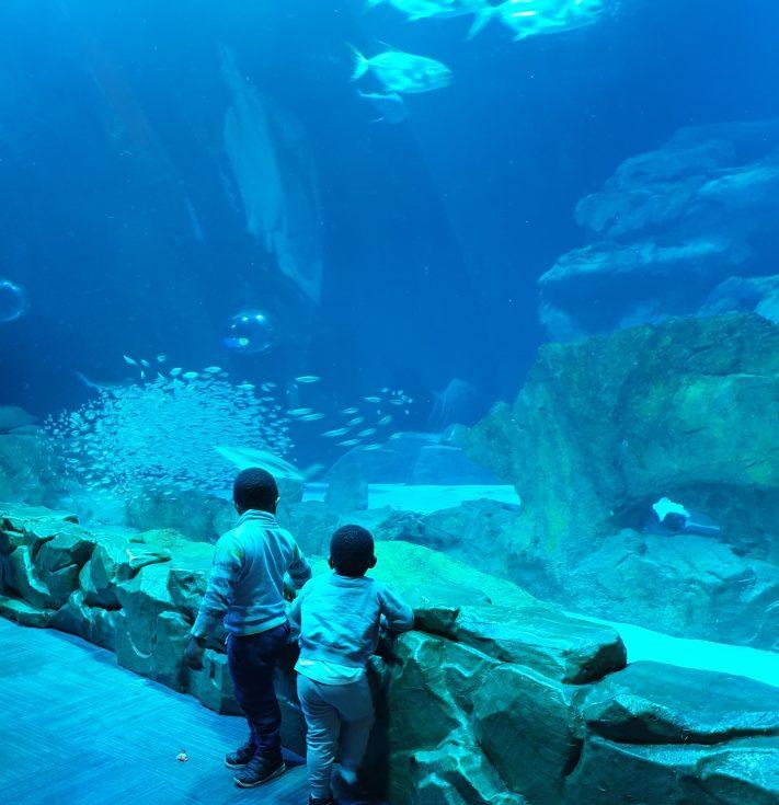 L'aquarium de Paris avec l'expo Oggy et les cafards