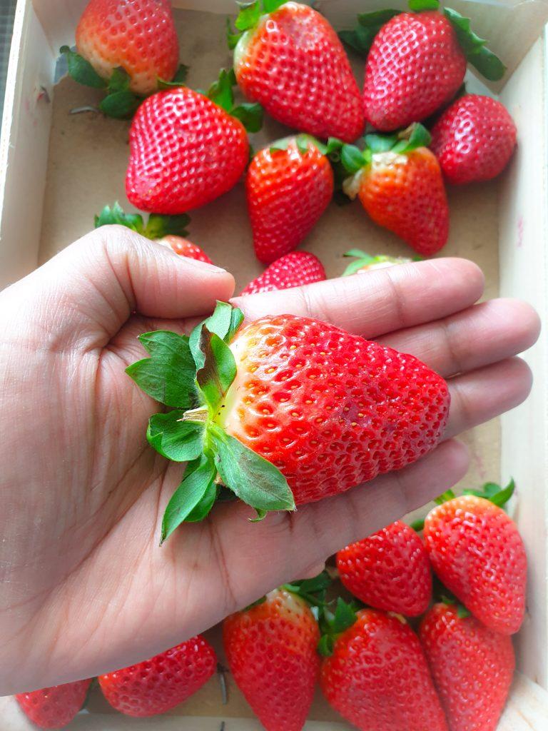 des fraises en hiver - planète en danger