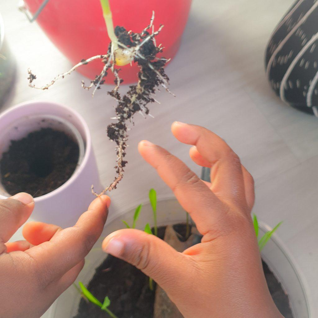 germination et semence activités à faire avec les enfants